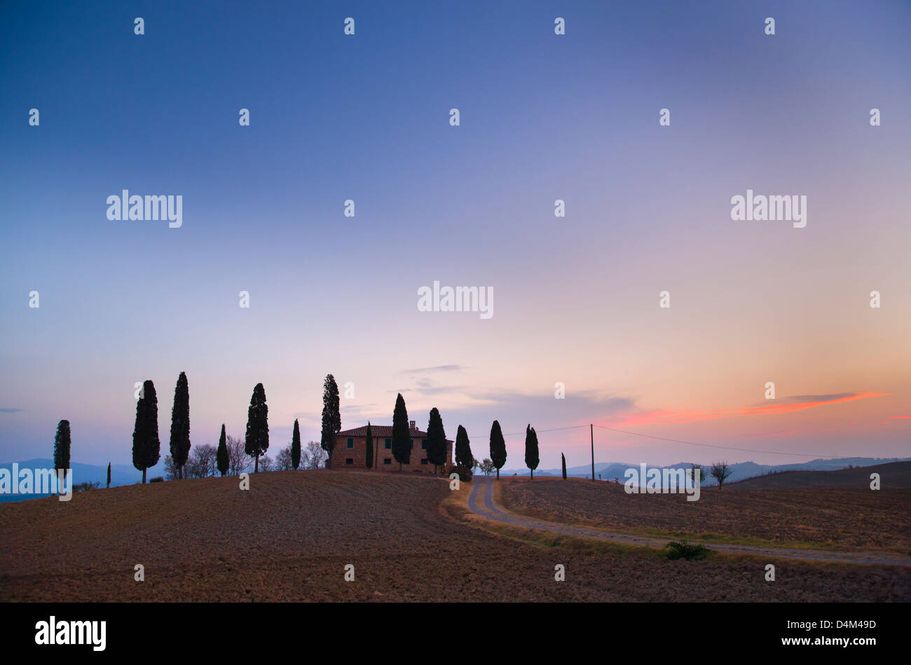 Tuscan cypress trees growing on hill - Stock Image