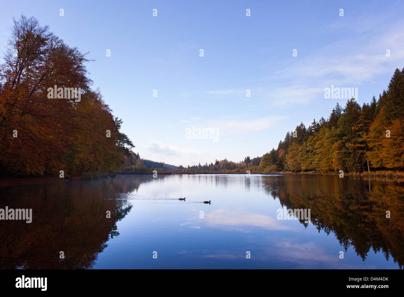 Trees reflected in still rural lake - Stock Image