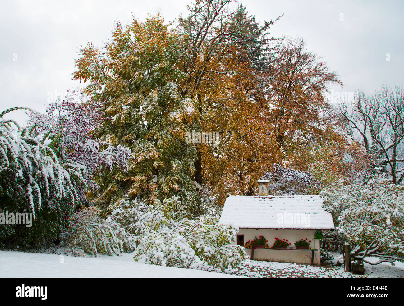 House and trees in snowy landscape - Stock Image