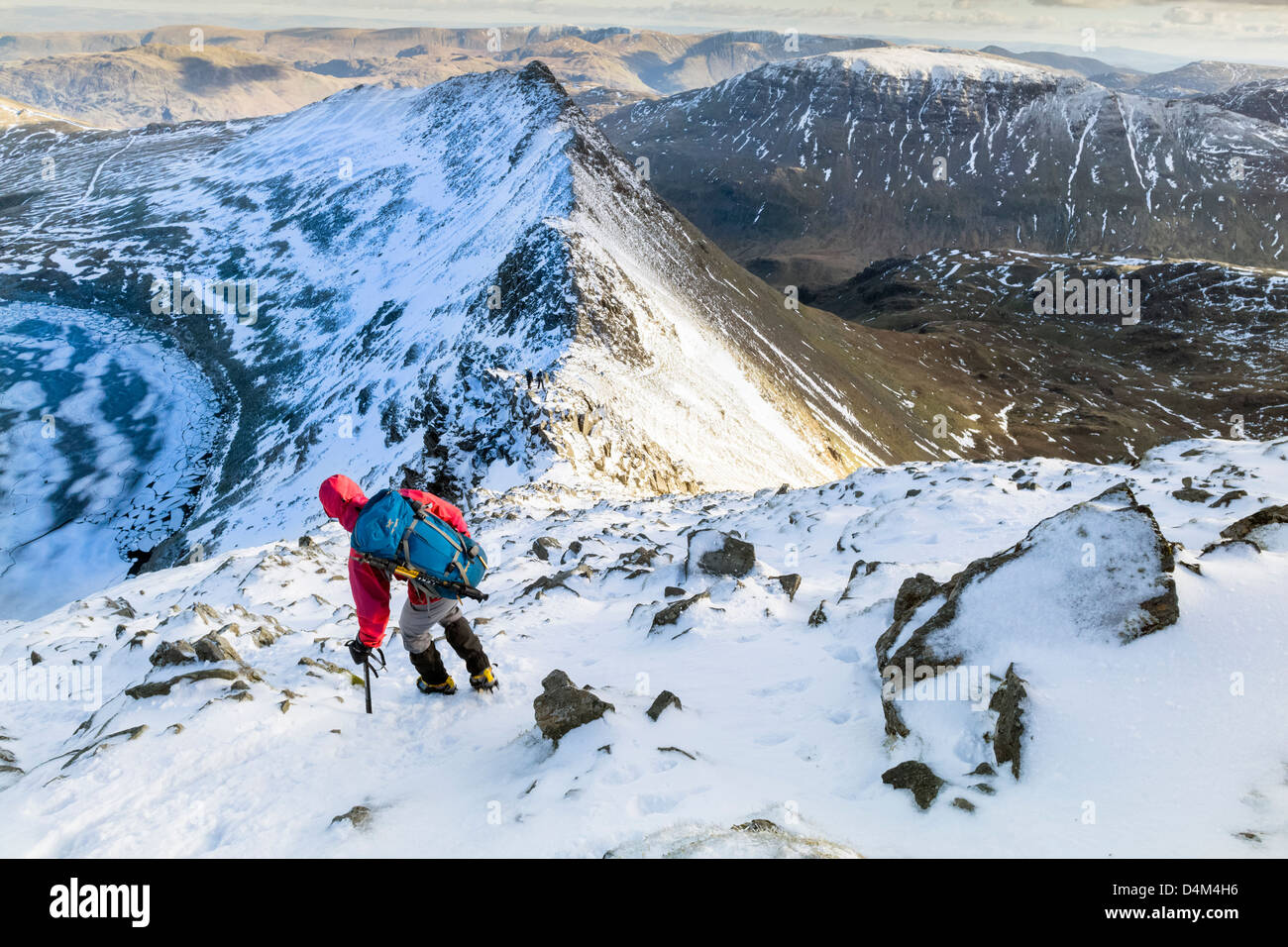 A hiker descending Helvellyn towards Striding Edge and Red Tarn in the Lake District. - Stock Image
