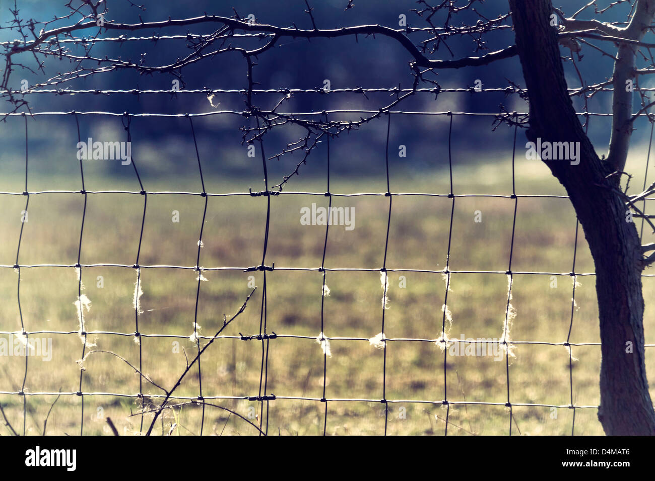 Square Wire Fence | Square Hole Wire Fence With Wool On It A Small Tree To The Right And