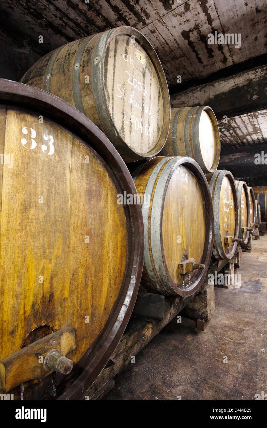 Guntersblum, Germany, and Halbstueckfaesser Barriquefaesser in a wine cellar - Stock Image