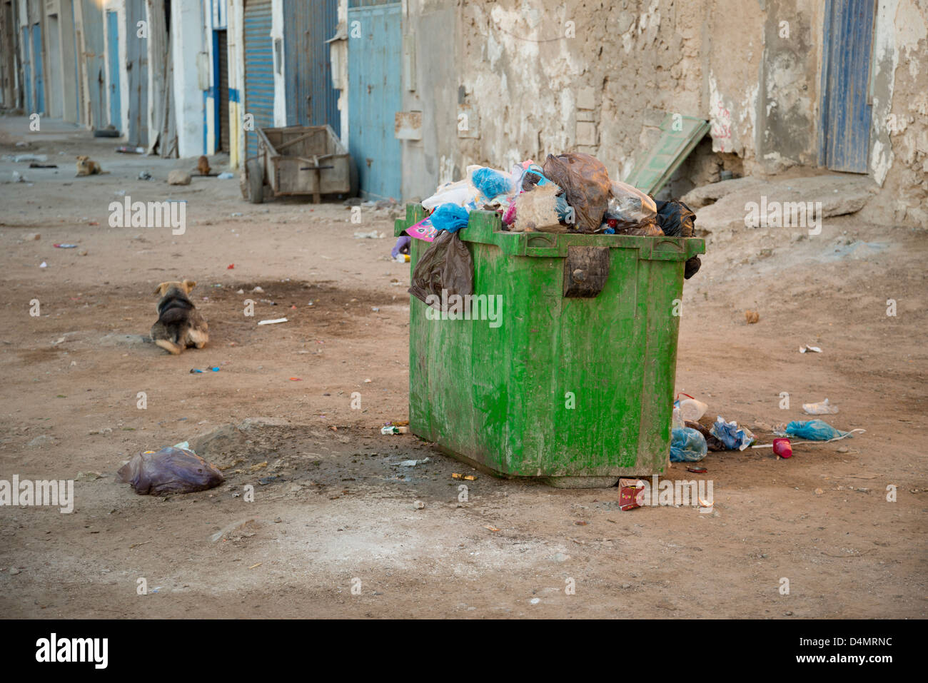 stray dogs and rubbish piled up in bin - Stock Image