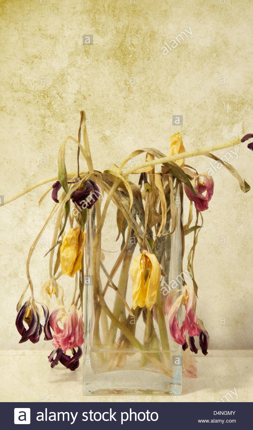 Glass Vase Of Wilting And Dead Flowers Hanging Over Edge Of Vase