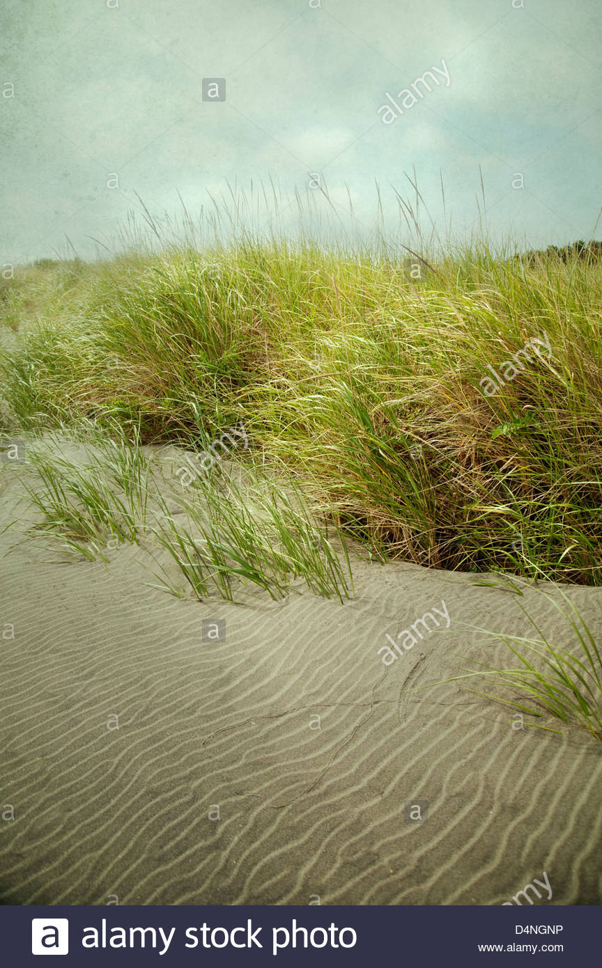 Atmospheric landscape of long grasses and sand at beach with stormy sky - Stock Image