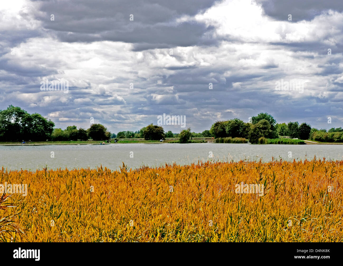 Bucks - Startops End reservoir - reed beds - shining water - summer day - mother of pearl sky - computer enhanced - Stock Image