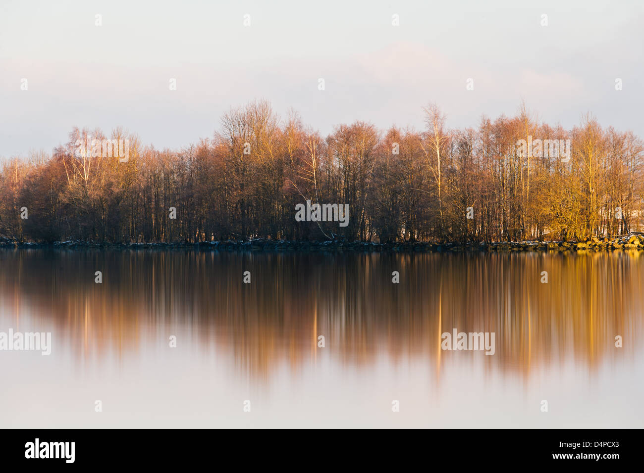 Trees on riverbank, Göta Älv, Sweden, Europe - Stock Image