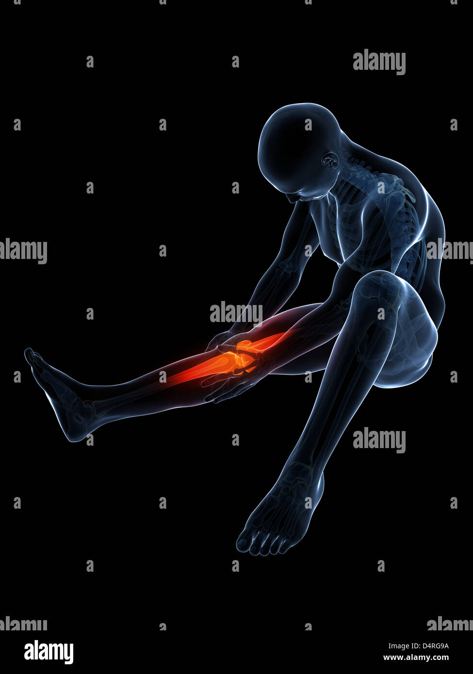 X ray foot hip accident health anatomical symptom femur stock photos highlighted knee joint stock image ccuart Images