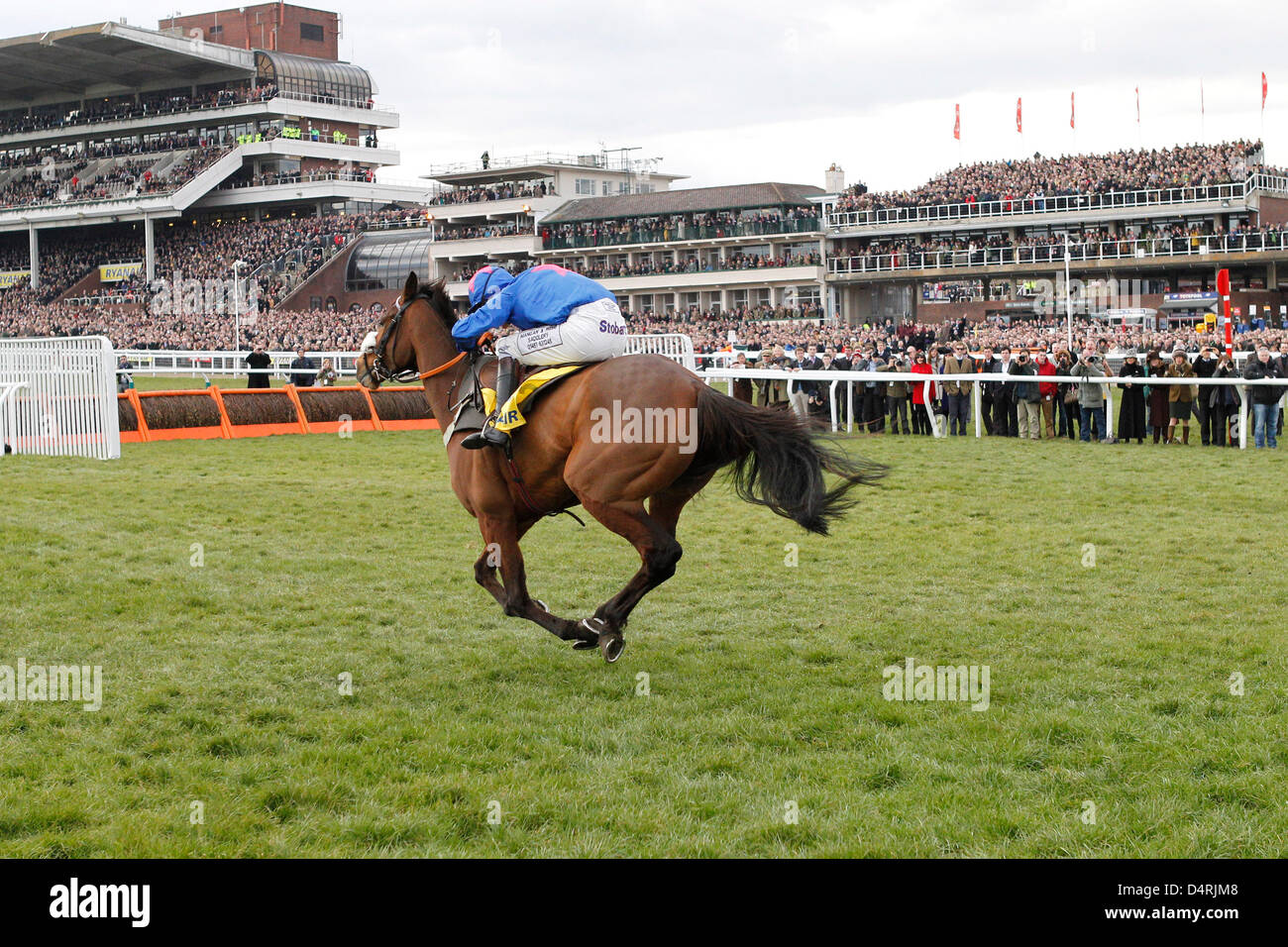 14.03.2013 - Cheltenham; Cue Card, ridden by Joe Tizzard wins the Ryanair Chase (Registered As The Festival Trophy - Stock Image