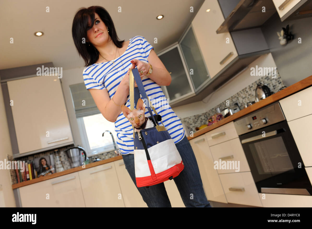 Pampered pet a Sphynx Cat in bag with female owner - Stock Image