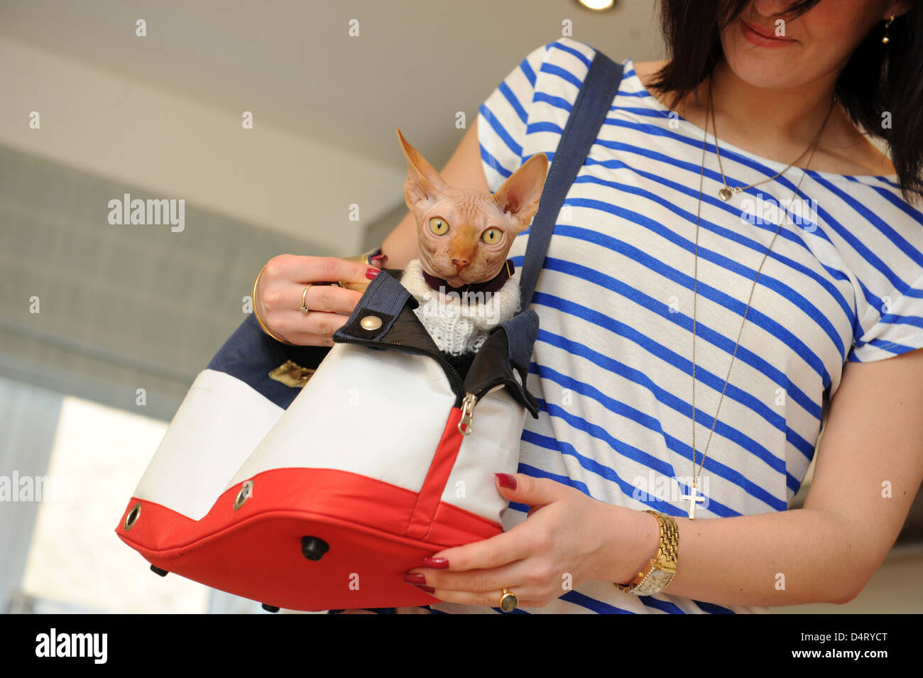 Pampered pet a Sphynx Cat in bag with female owner Stock Photo