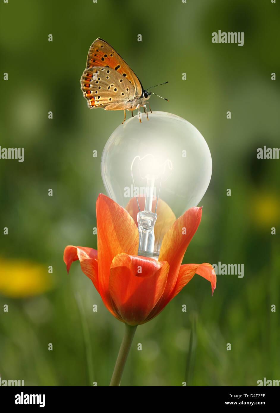 butterfly on the flower lighting bulb Stock Photo