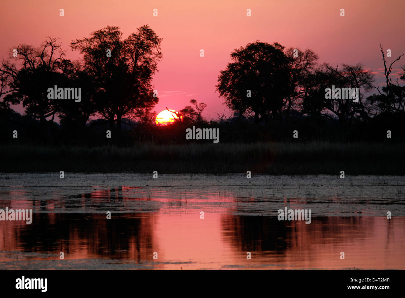 Botswana, Okavango Delta. Sunset view from the Fish Eagle Bar at Eagle Island Camp, an Orient Express safari property. - Stock Image