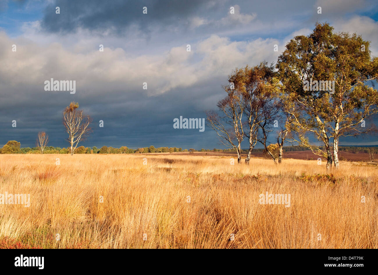 Stormy sky across grassand in summer Cannock Chase Country Park AONB (area of outstanding natural beauty) in Staffordshire - Stock Image