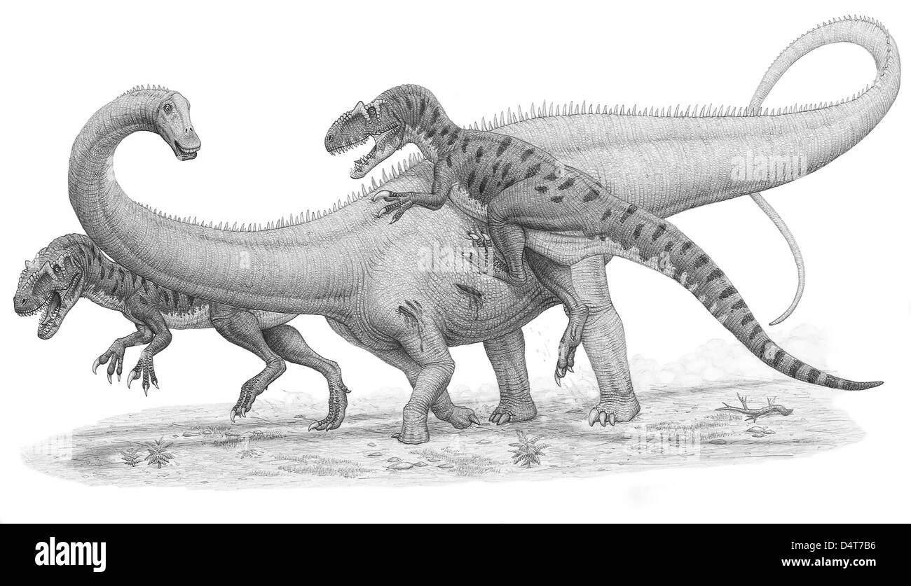 A group of Allosaurus attack a giant Diplodocus dinosaur. - Stock Image