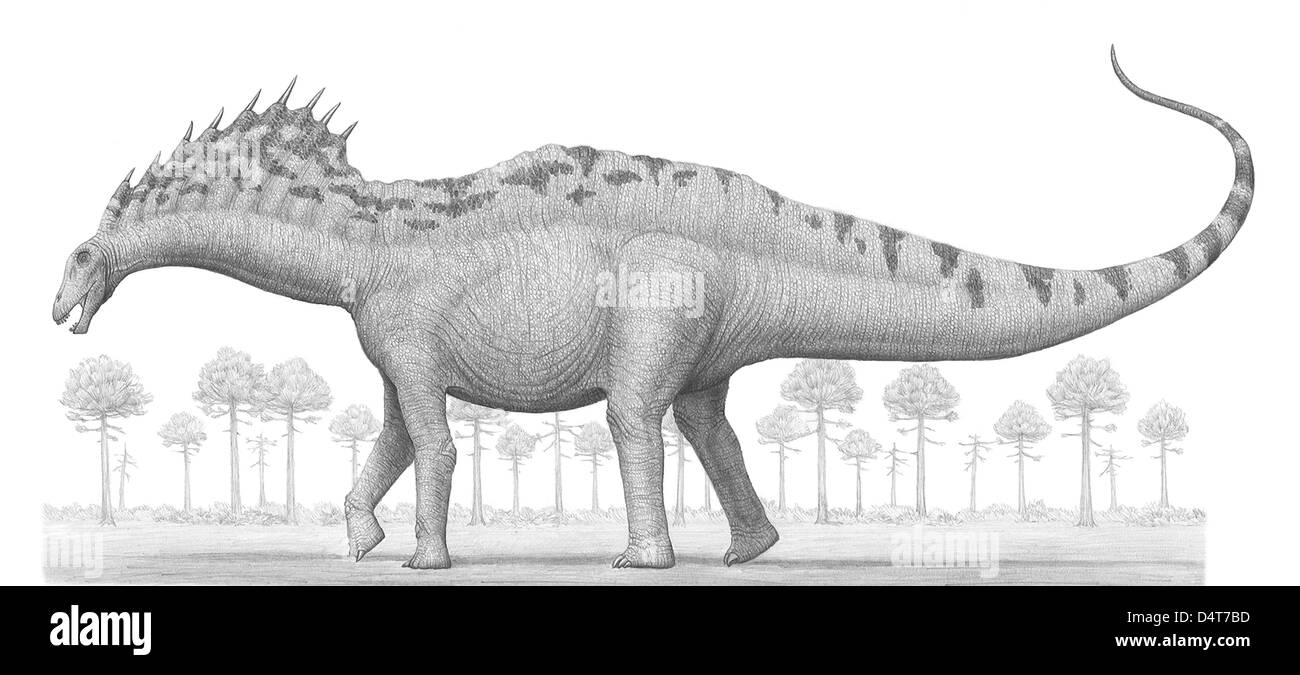 Amargasaurus cazaui, a sauropod dinosaur from the Early Cretaceous Period. - Stock Image