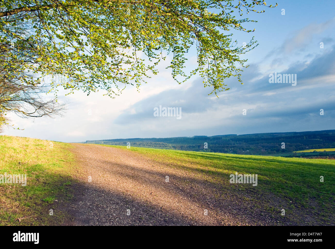 Shadows across Stilecop Field in early morning light Cannock Chase Area of Oustanding Natural Beauty in Spring Staffordshire - Stock Image