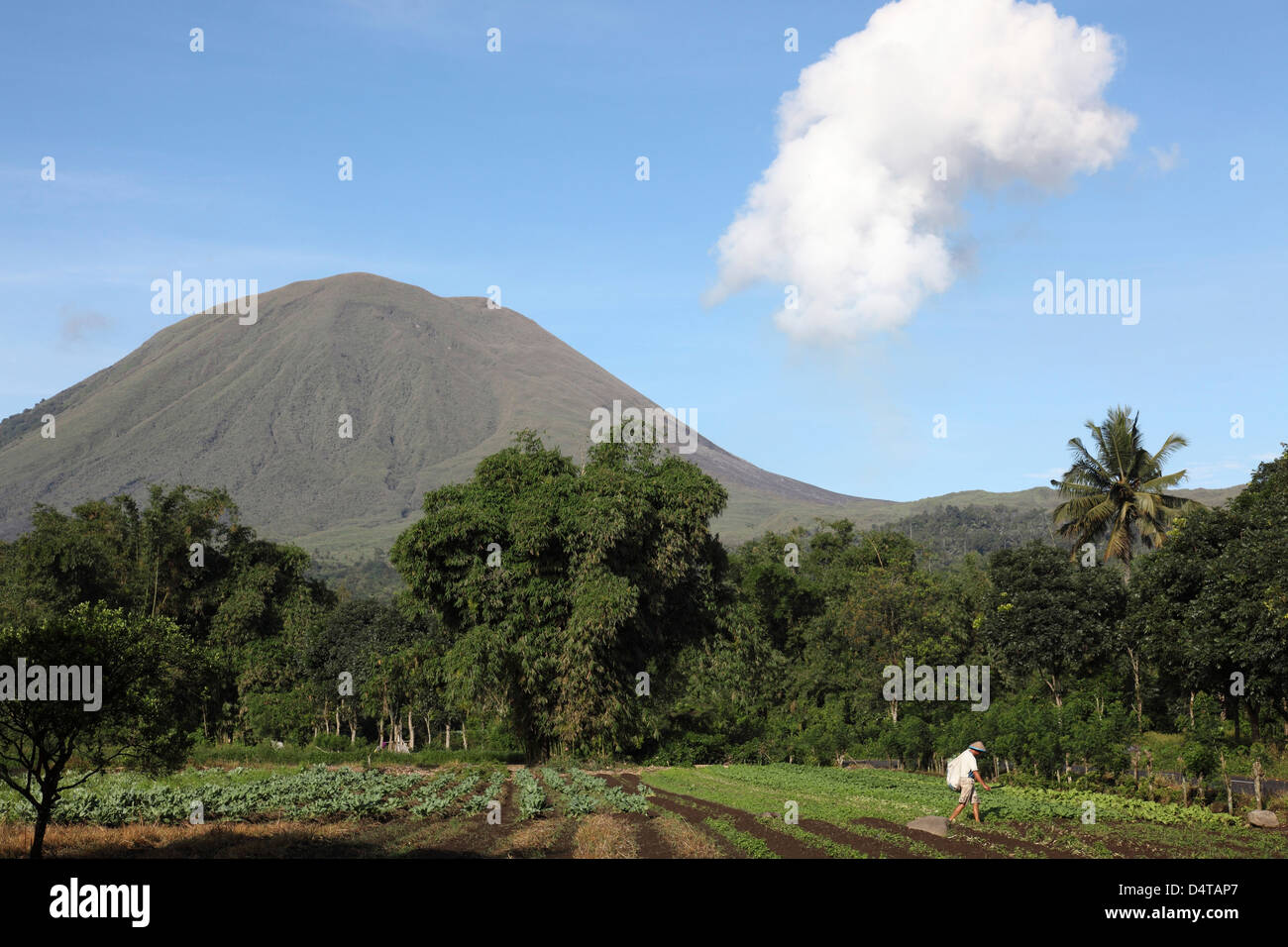 December 8, 2012 - Agriculture near Kinilow town at foot of Lokon-Empung volcano, Sulawesi, Indonesia. - Stock Image