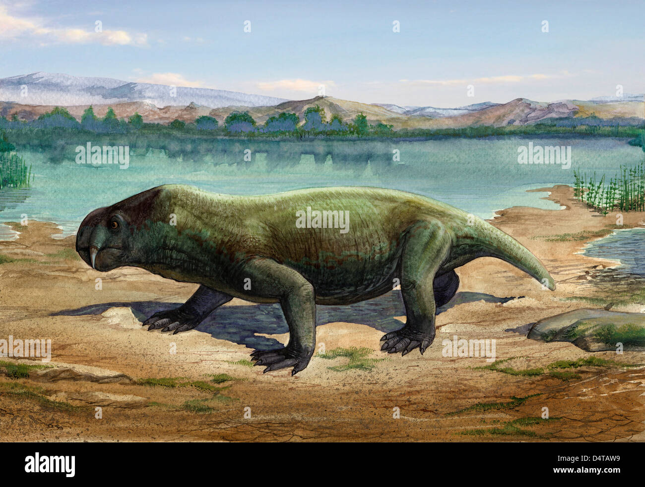 Dicynodon trautscholdi, a prehistoric animal from the Paleozoic Era. - Stock Image