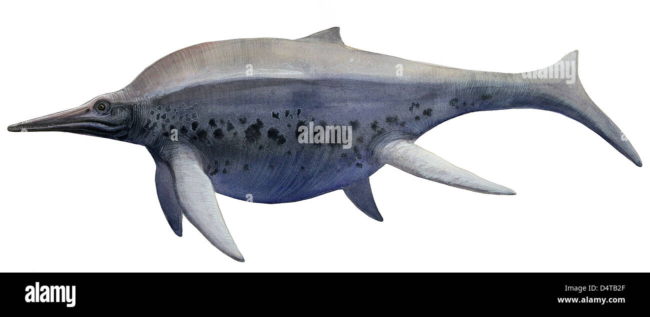 Illustration of a Shonisaurus, a prehistoric ichthyosaur from the Triassic age. - Stock Image