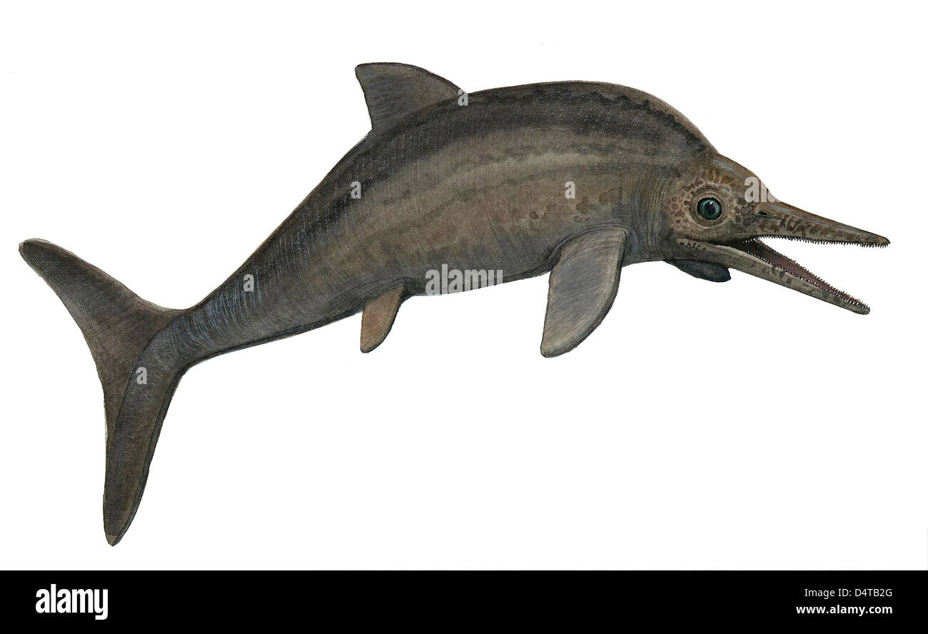 Illustration of a Stenopterygius quadriscissus from the prehistoric era. - Stock Image