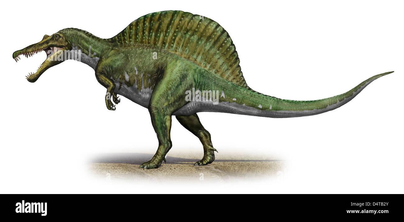 Spinosaurus aegyptiacus, a prehistoric era dinosaur from the Cretaceous period. - Stock Image