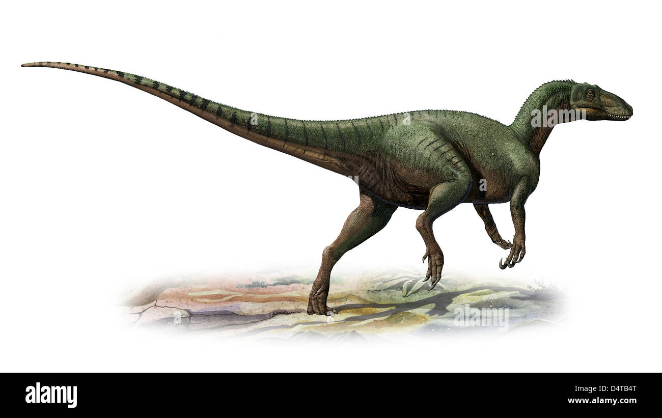 Australovenator wintonensis, a prehistoric era dinosaur from the Early Cretaceous period. - Stock Image