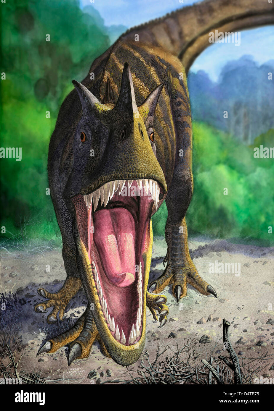 An angry Ceratosaurus dentisulcatus dinosaur shows its fierce teeth. - Stock Image