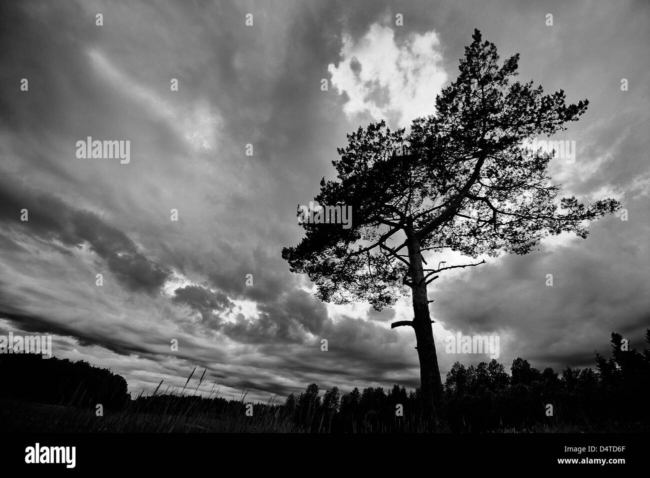 Stormy, ominous sky with a tree in the foreground - Stock Image