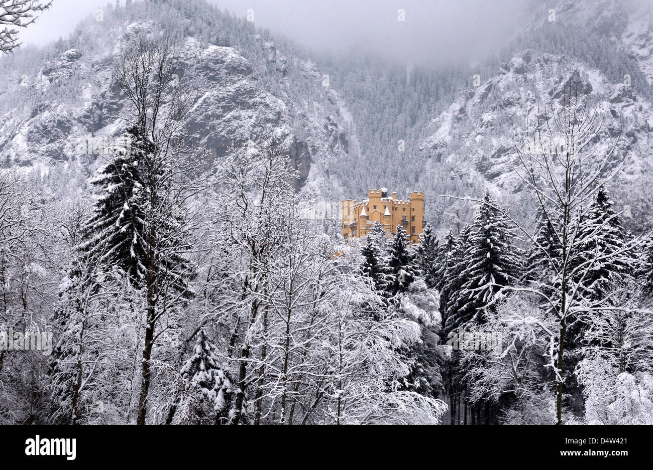 White Christmas In Germany.Hohenschwangau Castle In Between Snow Covered Trees Near