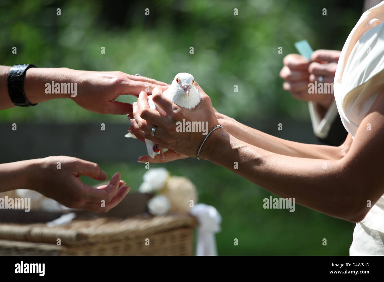 white wedding dove two - Stock Image
