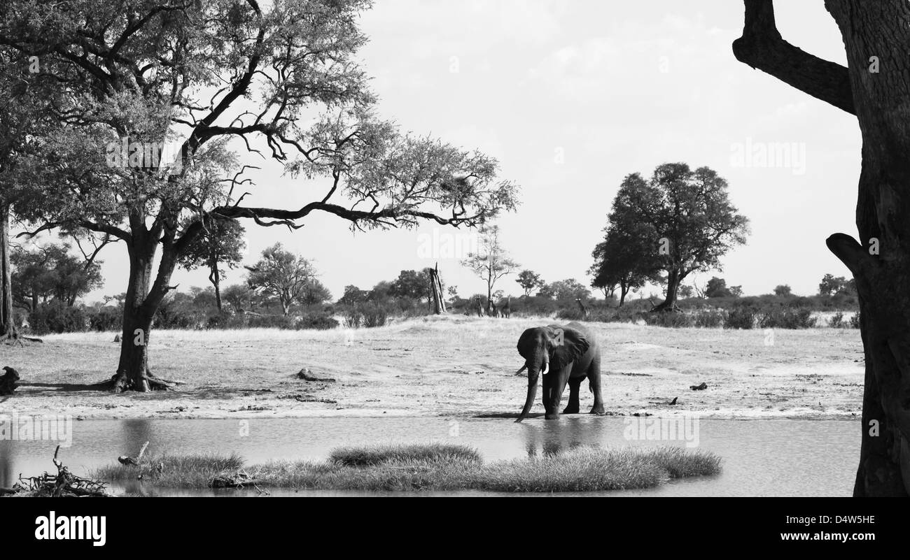 Waterhole Black And White Stock Photos & Images