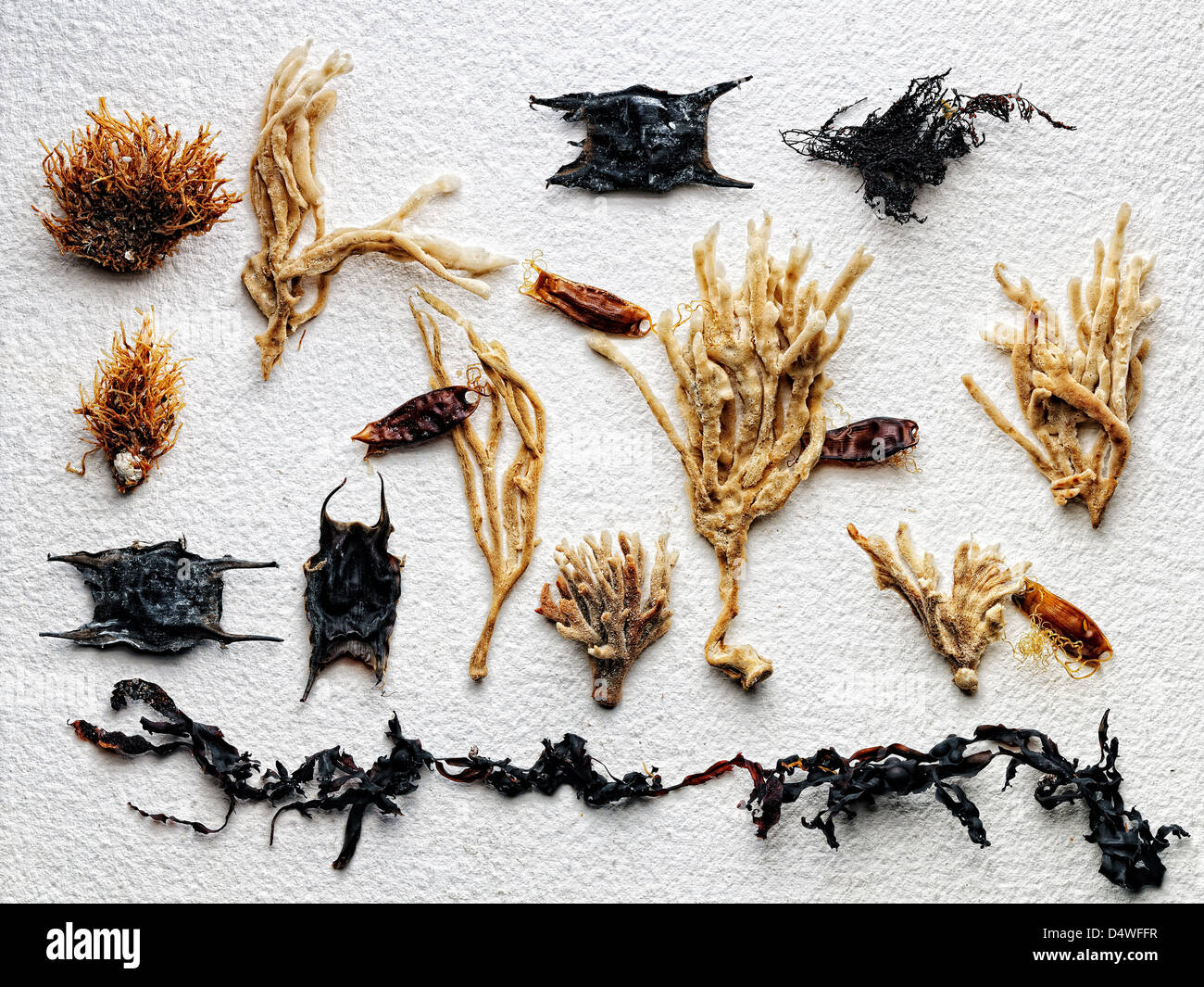 Dried plants arranged on paper - Stock Image