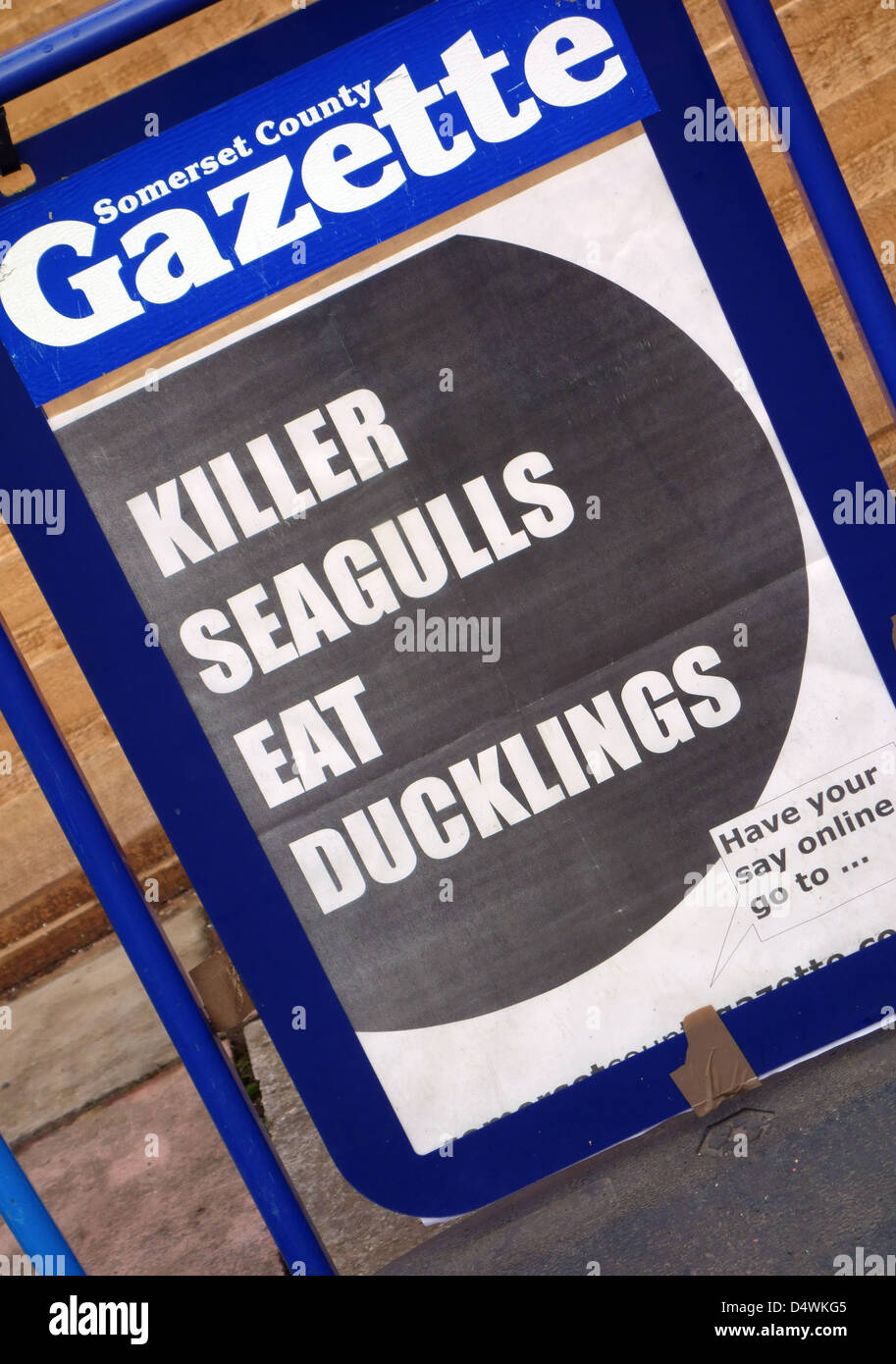 Unusual headline in local newspaper in Somerset, England - Stock Image