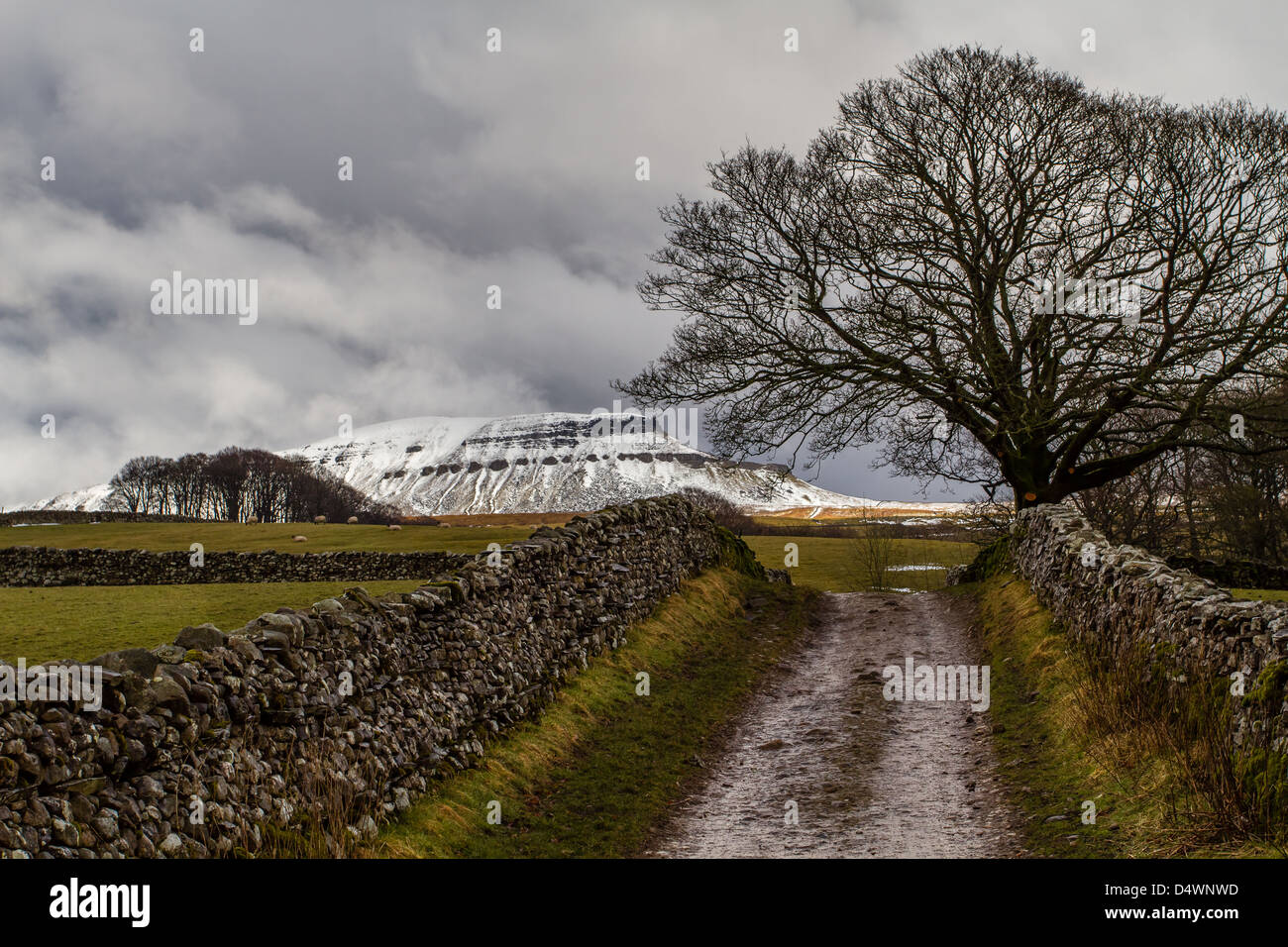 Heading up towards Pen-y-Ghent, one of the Yorkshire 3 Peaks - Stock Image