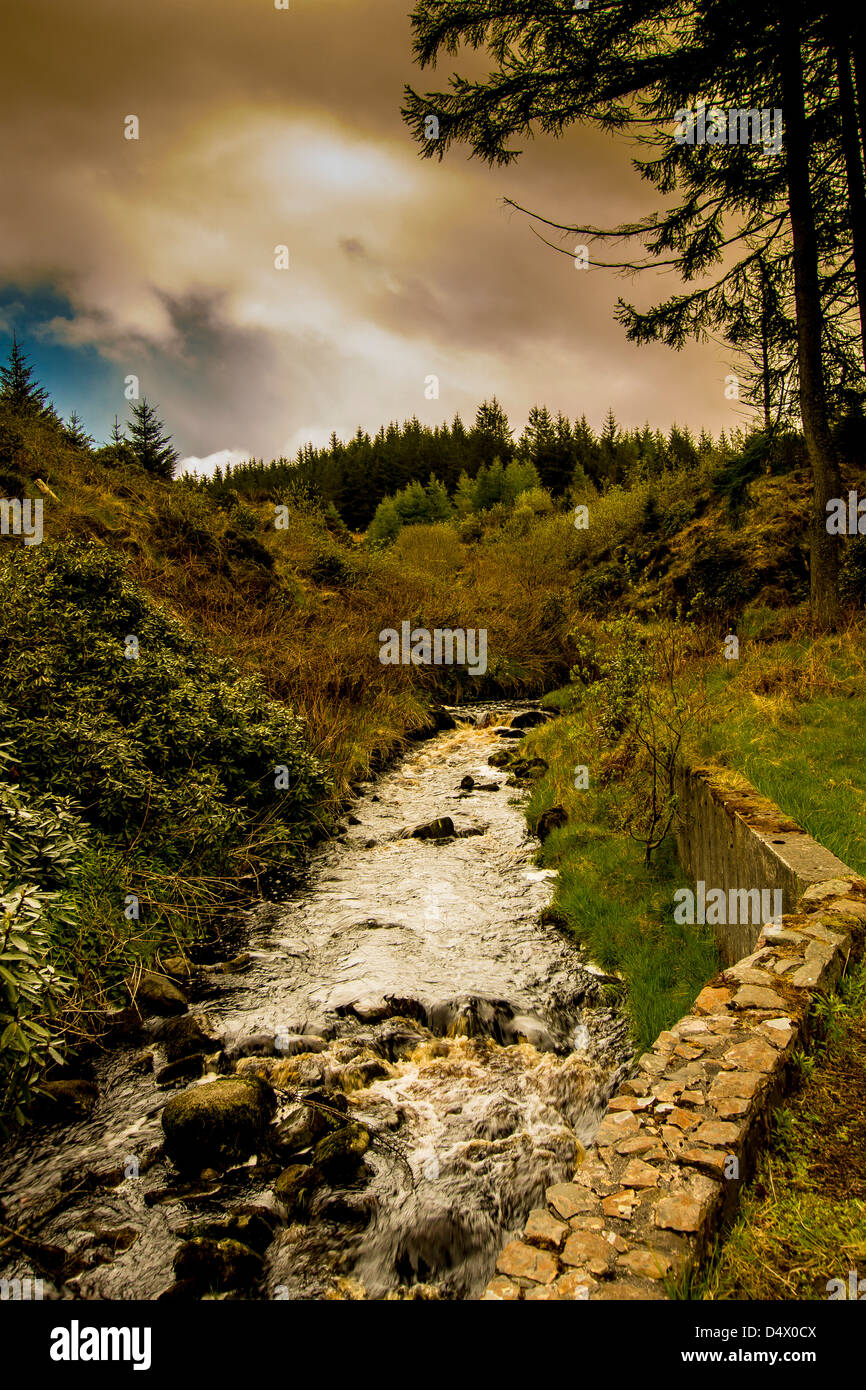 Ballypatrick Forest County Antrim Northern Ireland - Stock Image
