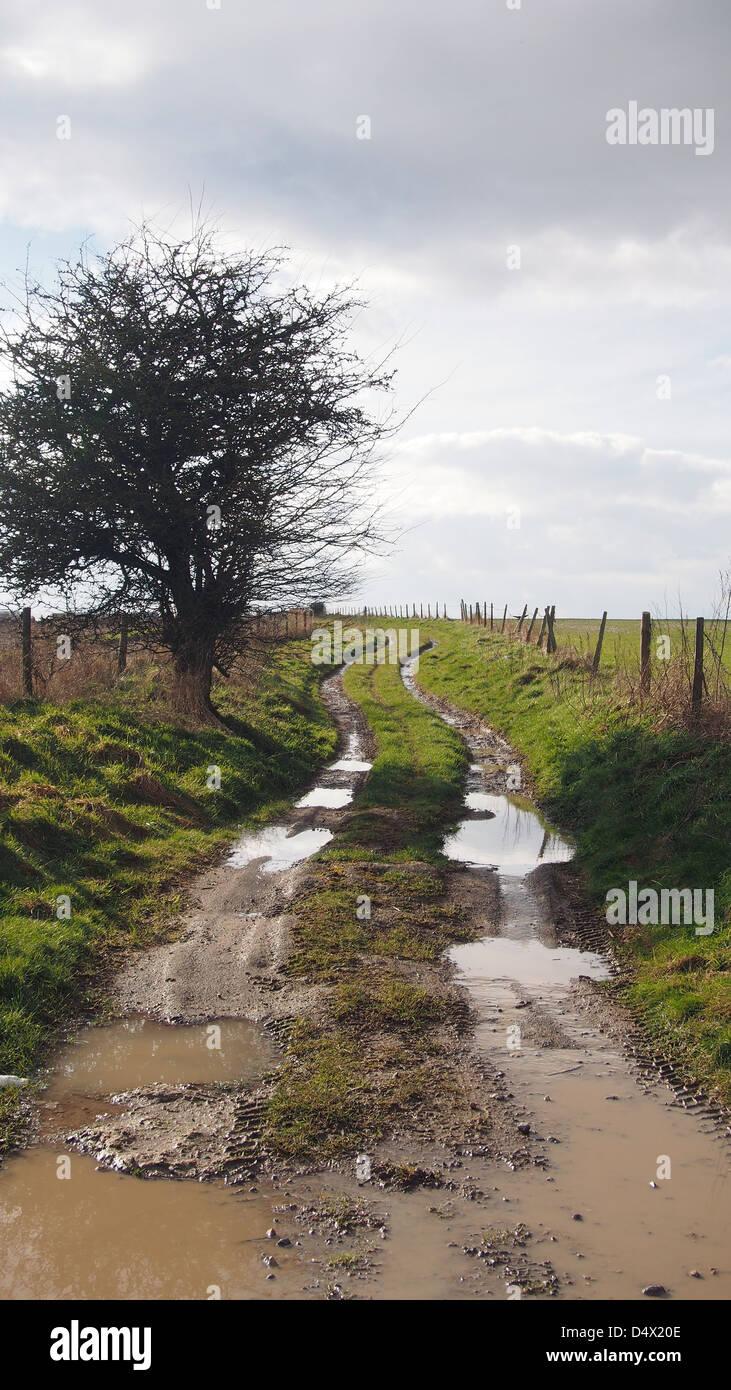 Muddy lane through a field - Stock Image