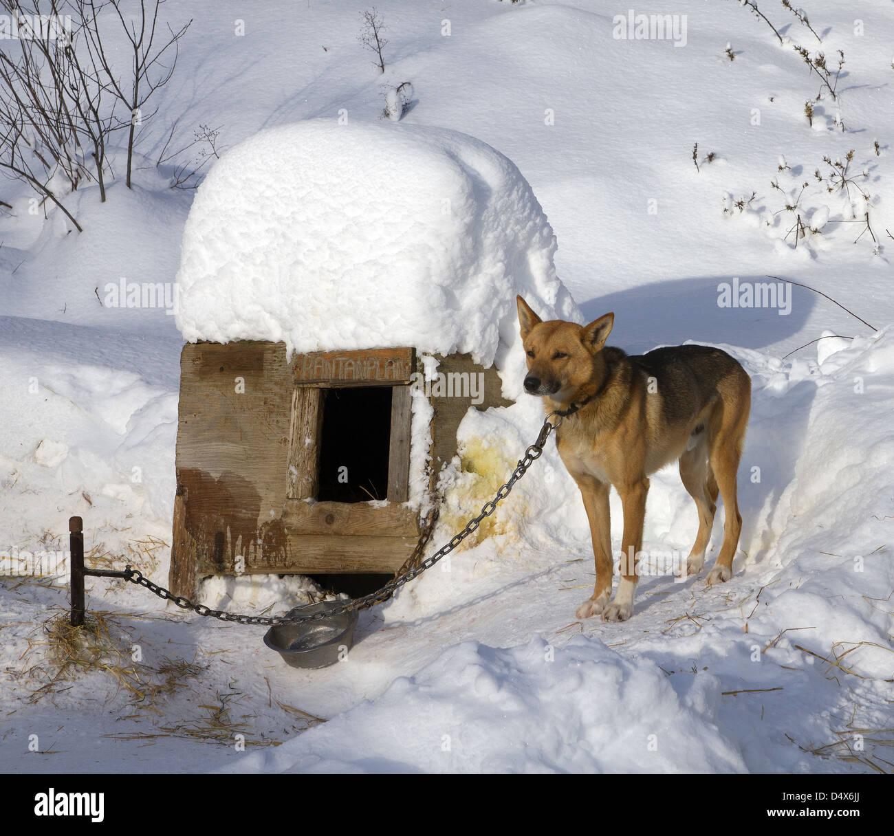 Картинка собаки с надписью теперь перезимуем а теплых будках, приколы