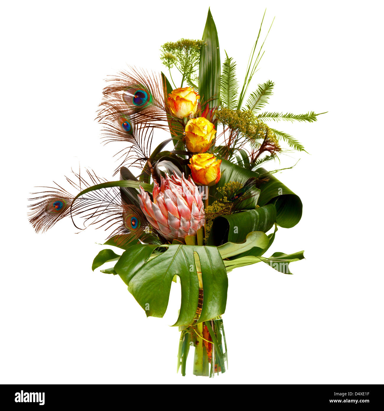 male bouquet with peacock feathers, isolated over white background - Stock Image