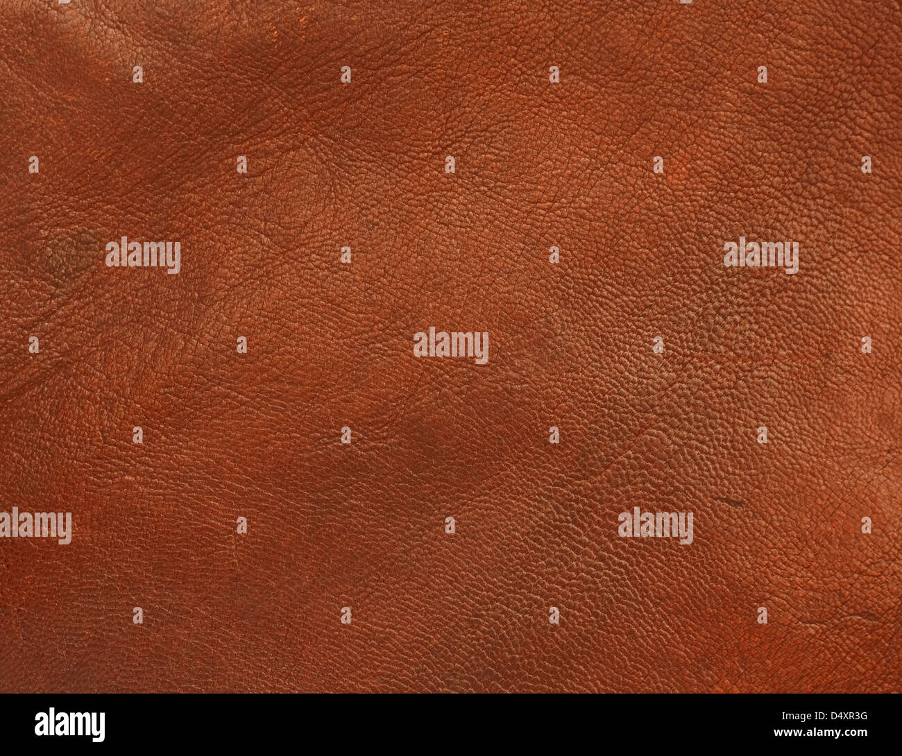 Genuine leather background of brown polished shiny animal skin - Stock Image