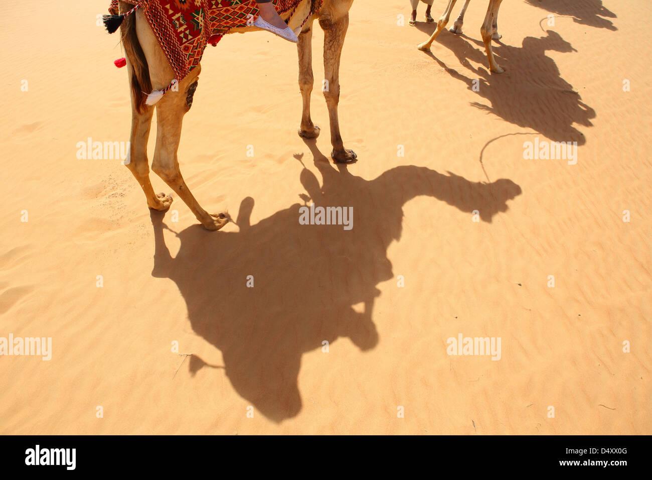 Shadows of camels on desert sand, Dubai, United Arab Emirates - Stock Image