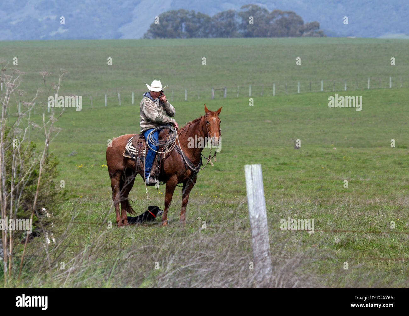 Modern Cowboy on Horseback and Talking on Cell Phone - Stock Image