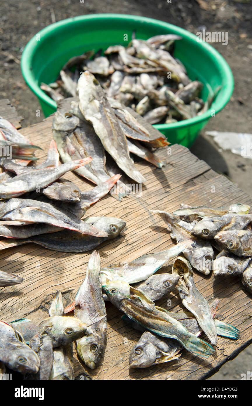 March 4, 2013 - Cote Des Arcadins, Hasiti - March 4, 2013, Cote des Arcadins, Haiti - Fish for sale in a market - Stock Image