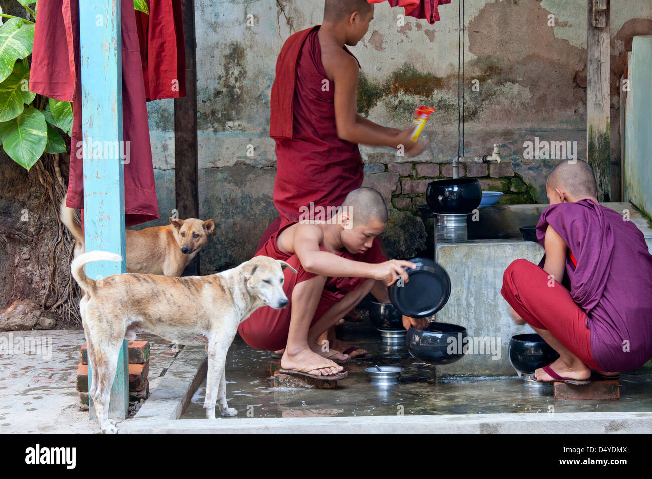 At a monastery in Mandalay dogs patiently wait, with tails wagging, for handouts as monks clean up after a meal, - Stock Image