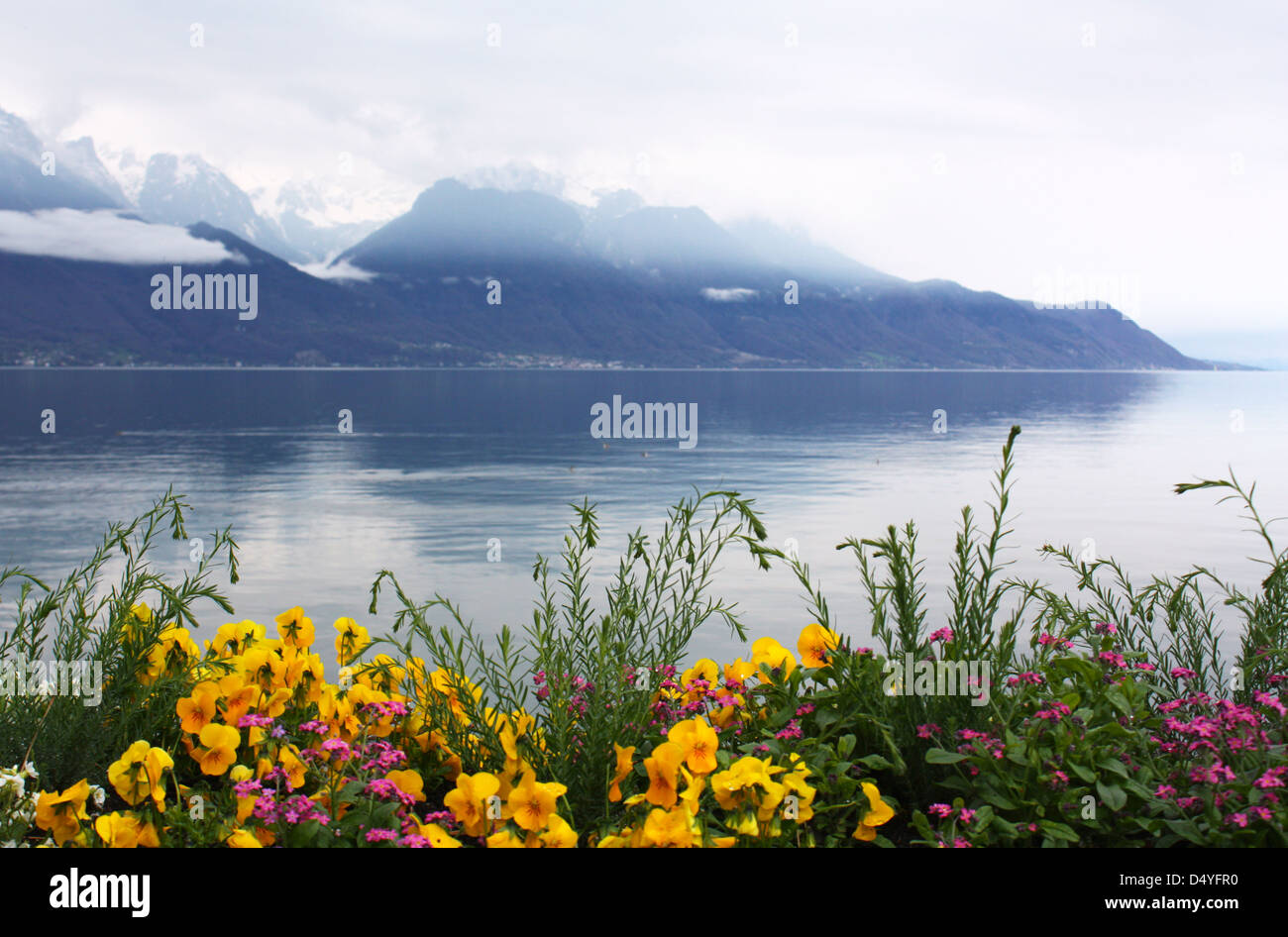 Beautiful flowers with snow mountain in the background Stock Photo