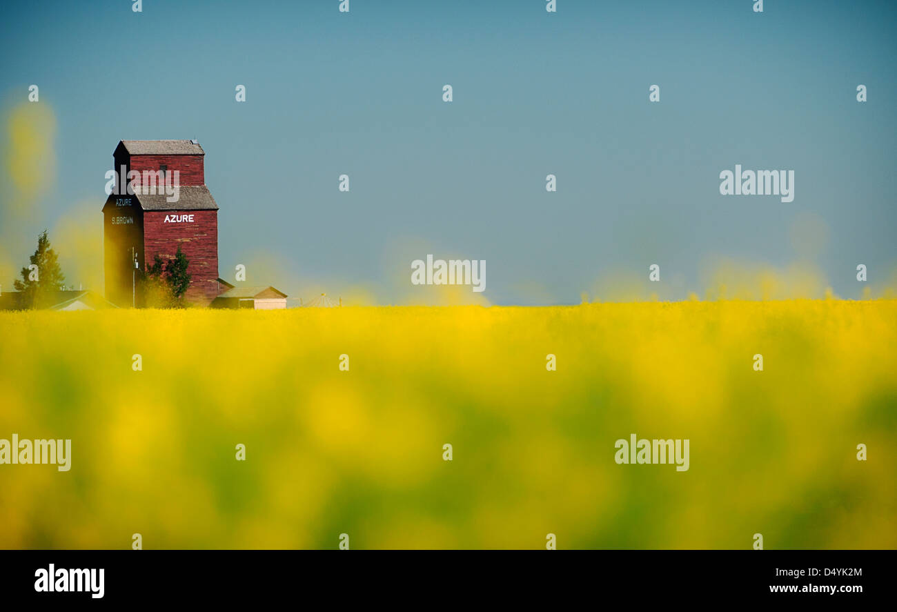 This was taken in a Canola field. An old grain mill was still standing in the distance. - Stock Image
