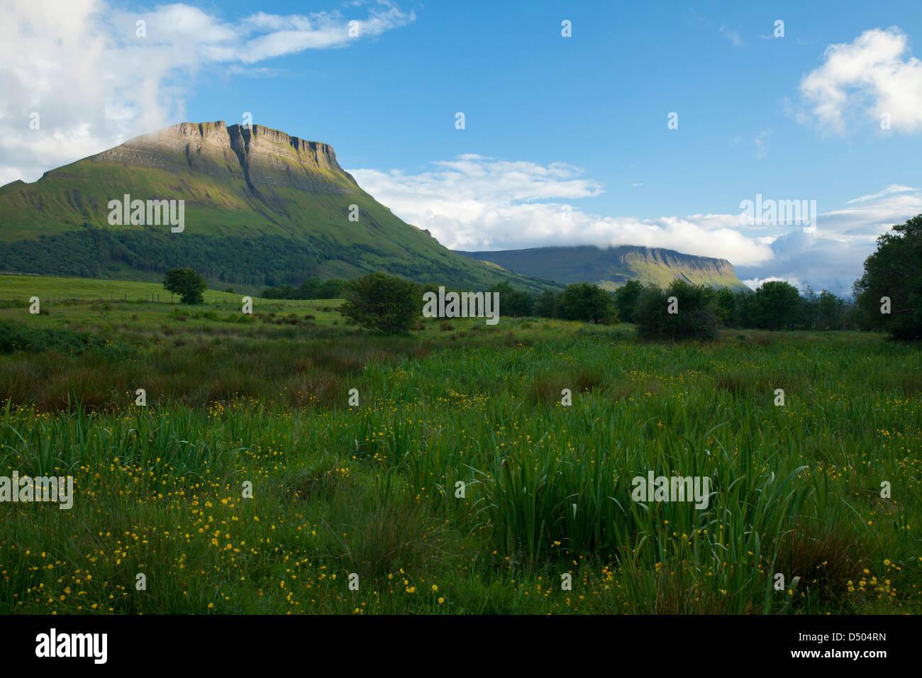 Wildflower meadow beneath Benwiskin mountain, County Sligo, Ireland. Stock Photo