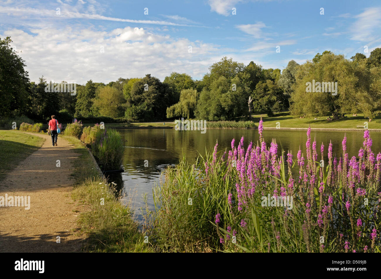 London, Hampstead Heath, Highgate ponds, the 'model boating pond'. - Stock Image