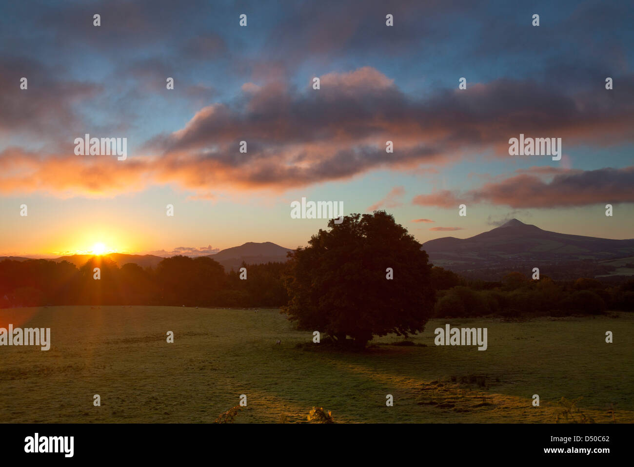 Dawn over Great Sugar Loaf mountain from Powerscourt Estate, County Wicklow, Ireland. Stock Photo