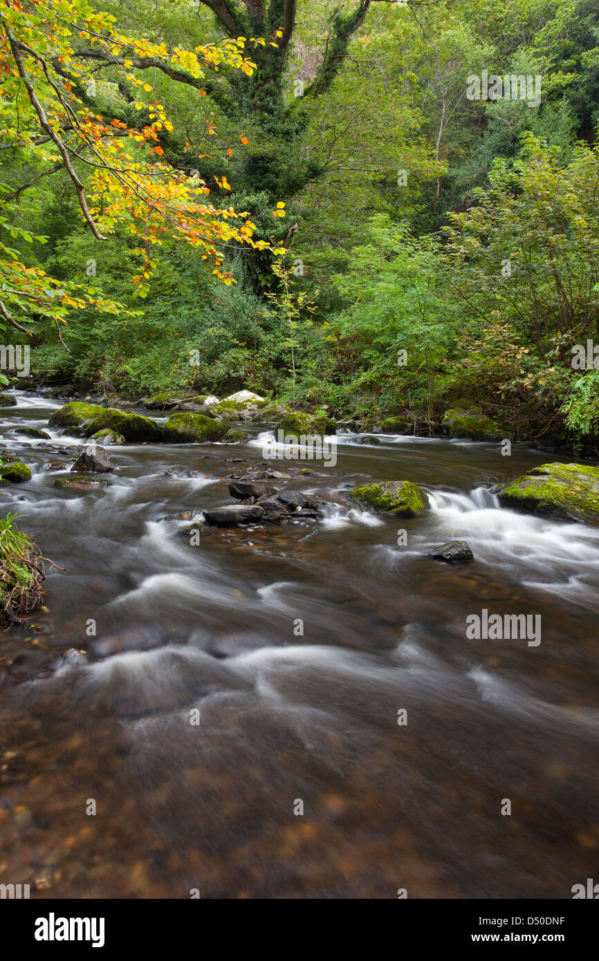 The River Vartry flowing through the Devil's Glen, County Wicklow, Ireland. Stock Photo